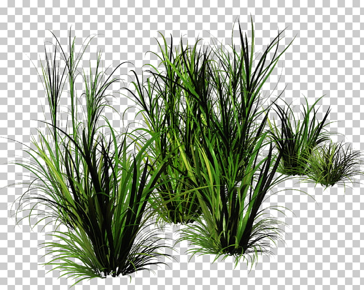 43 bunch grass PNG cliparts for free download.