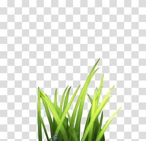 Bunch grass PNG clipart images free download.