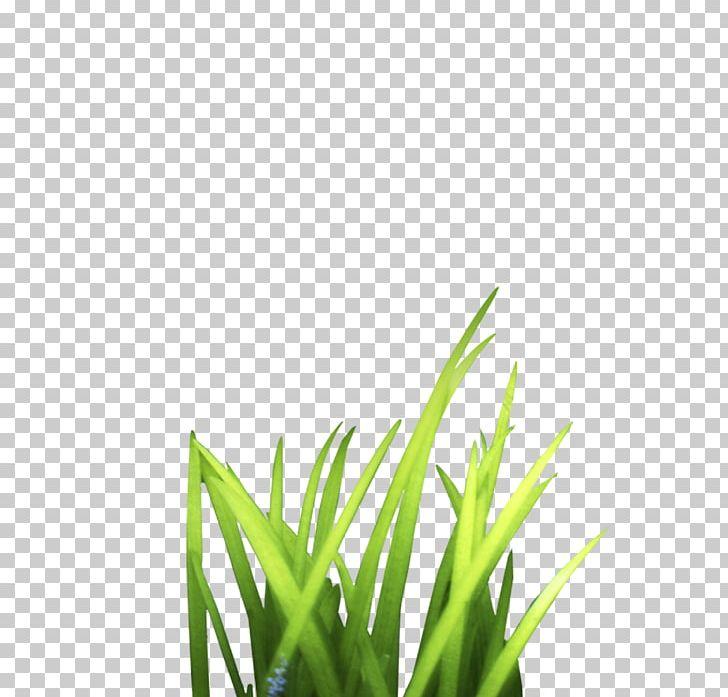 Grass clipart bunch, Grass bunch Transparent FREE for.