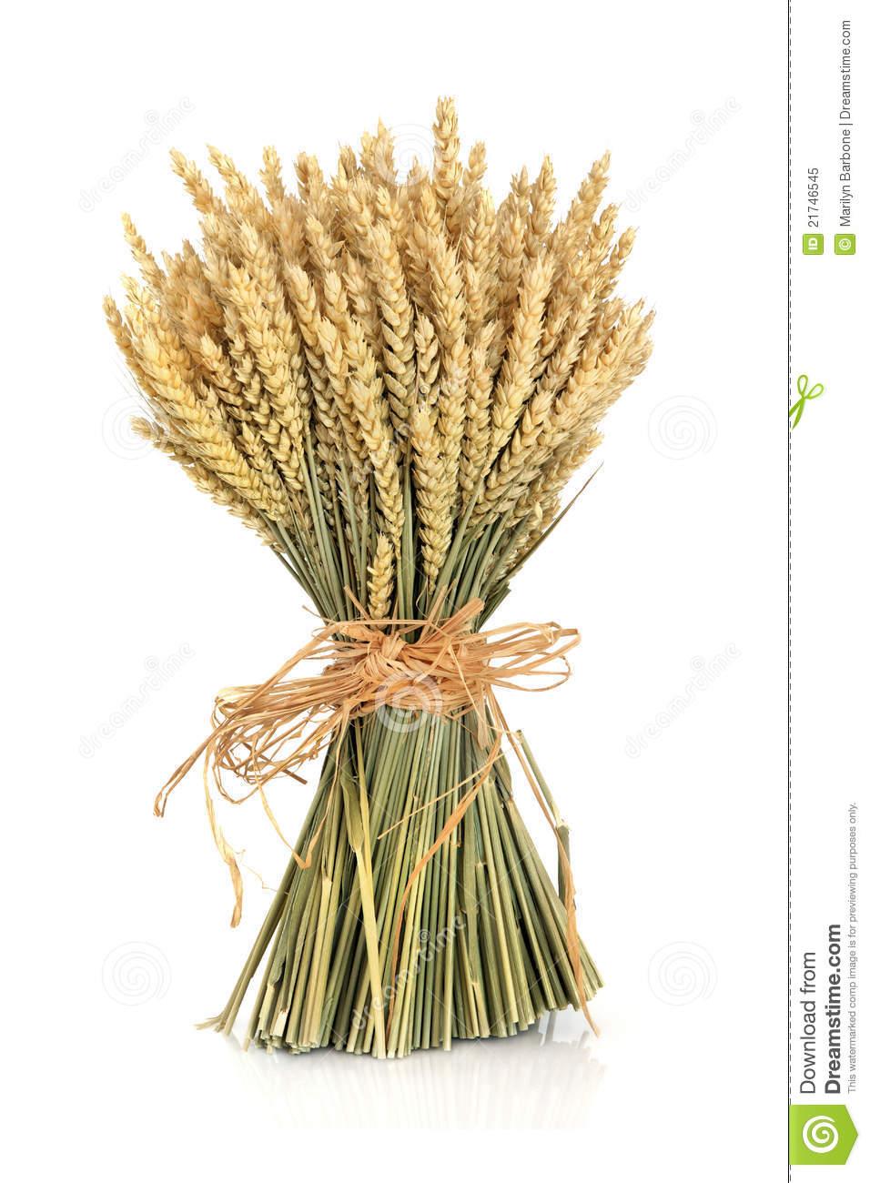 Wheat bundle clipart.
