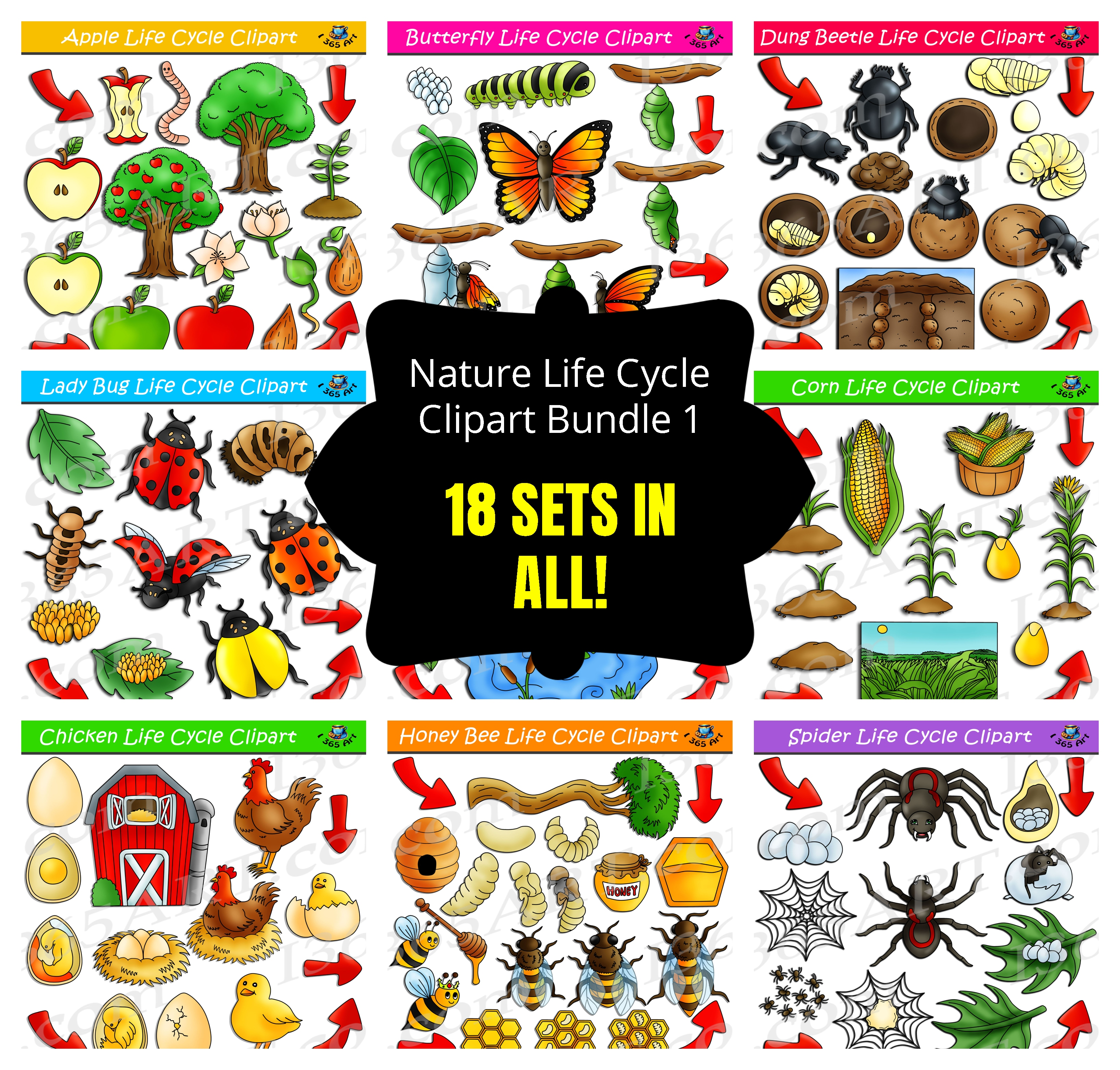 Nature Life Cycle Clipart Bundle #1.