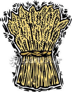 Bundle of Wheat Royalty Free Clipart Picture.
