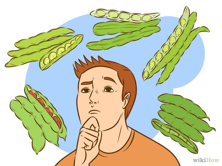 Cara Menanam dan Menumbuhkan Tanaman Kacang Polong.