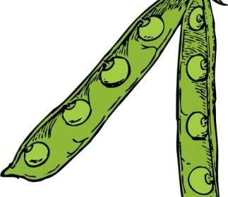 Kacang Polong Clip Art.