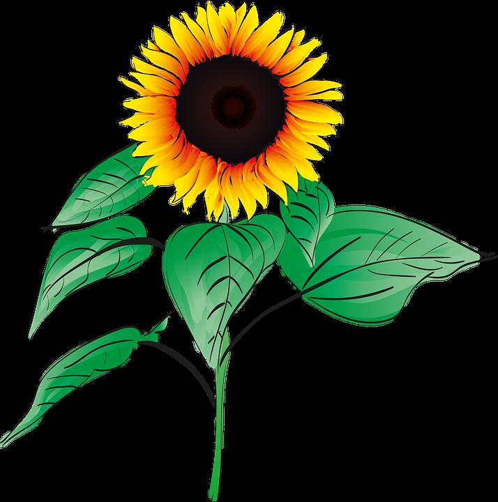 Clipart bunga matahari 9 » Clipart Station.