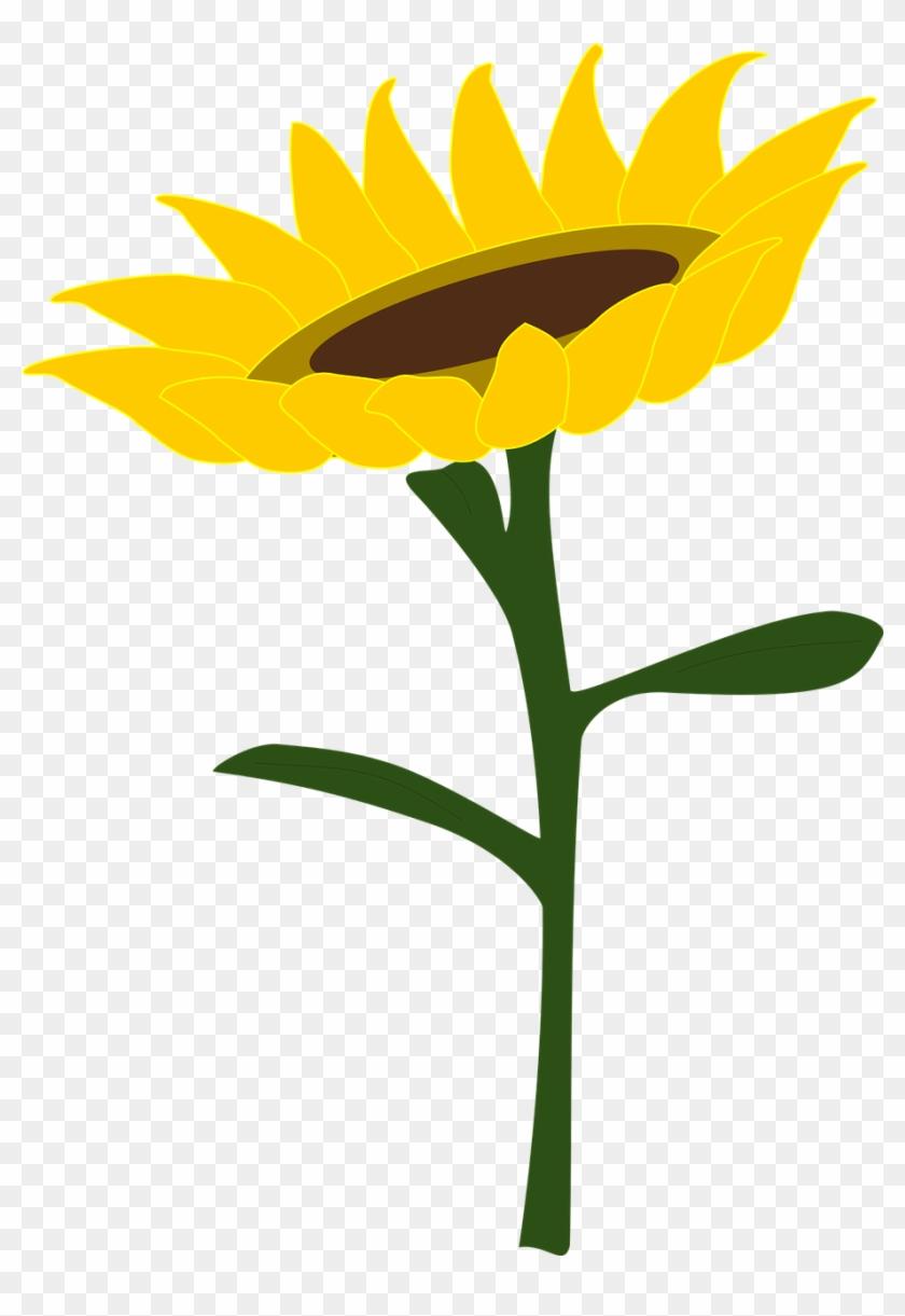 Sunflower Honey Sunflower Field.
