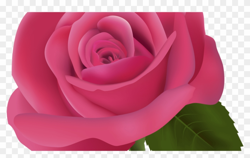 Pink Rose Png Clipart Image Best Web Clipart.