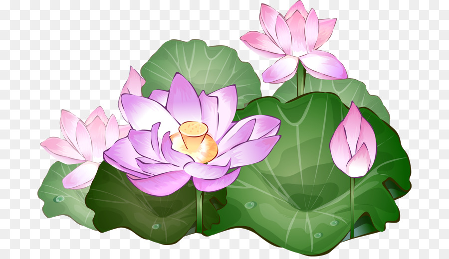 1071 Lotus Flower free clipart.