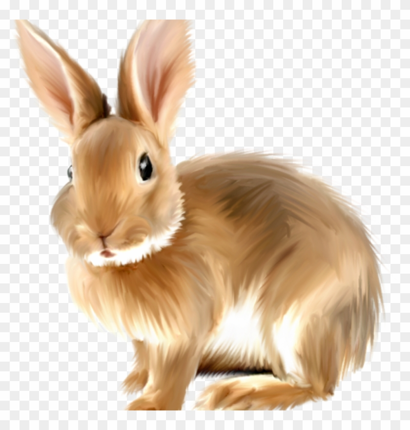 Rabbit Clipart Png & Free Rabbit Clipart.png Transparent.
