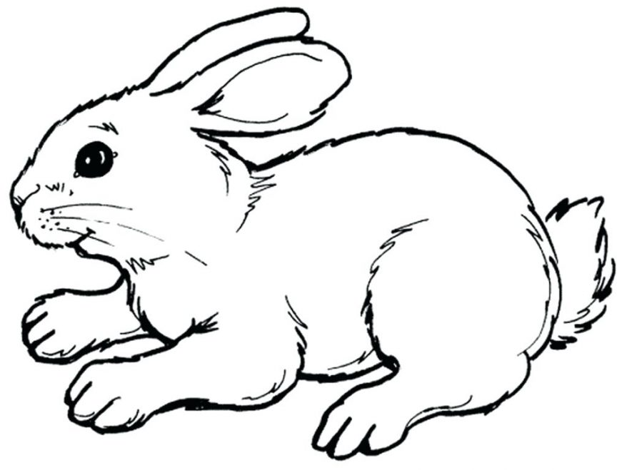bunny outline Moving bunny clip art animated rabbit pictures and.
