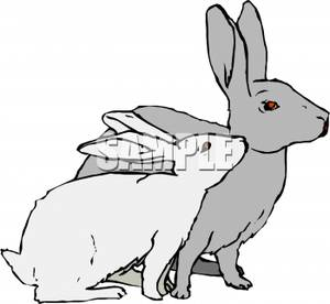 Rabbit and bunny clipart.