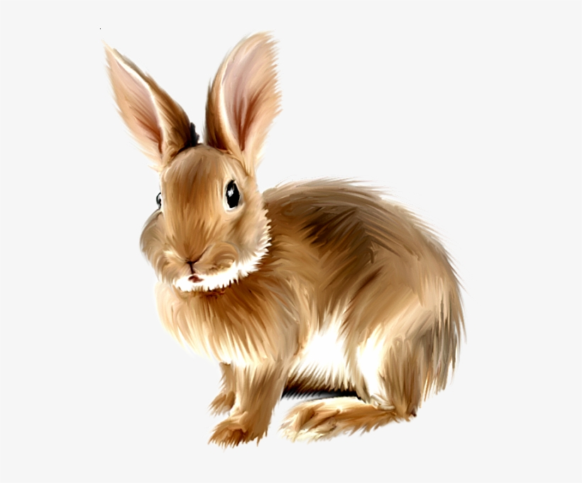 Rabbit Png, Bunny Rabbit, Rabbit Clipart, Baby Bunnies,.