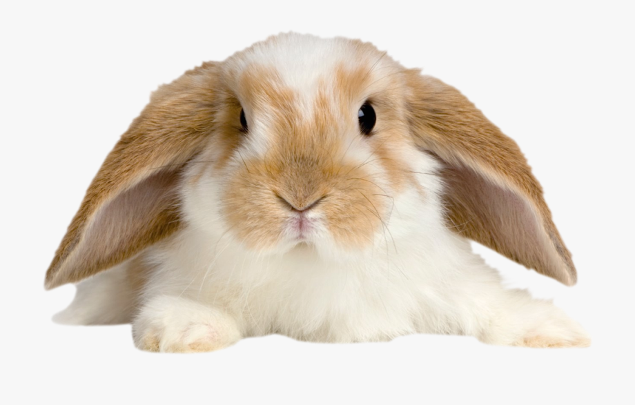 Rabbit Png Baby.