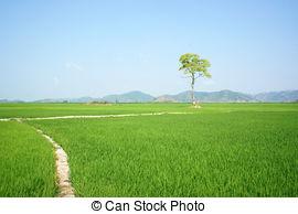 Stock Photos of tree, Vietnam paddy field,.