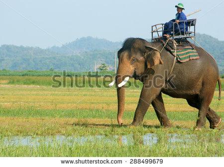 Bon Me Thuot Stock Photos, Images, & Pictures.