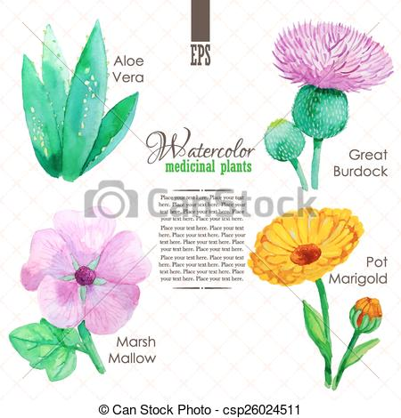 Vector Clip Art of Set of watercolor madicinal plants such as.