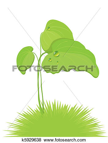 Clip Art of burdock leaves k5929638.
