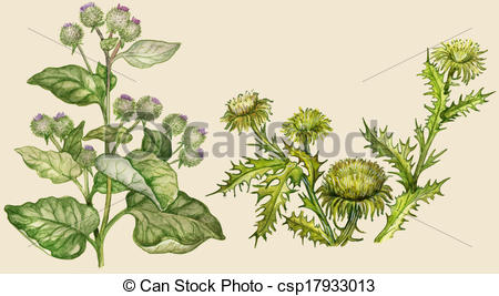 Clipart of Burdock and thistle, painted in vintage manner.