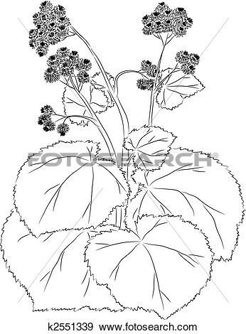 Clip Art of Graceful burdock k2551339.