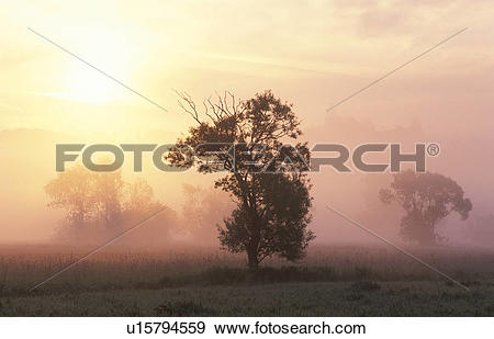 Stock Photograph of lafnitztal, burgenland, fog, clump of trees.