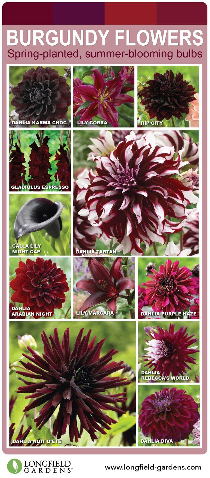 25+ best ideas about Burgundy Flowers on Pinterest.