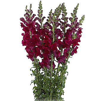 25+ best ideas about Burgundy Flowers on Pinterest.