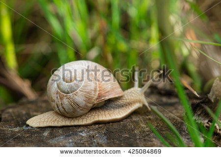 Field Snail Stock Photos, Royalty.