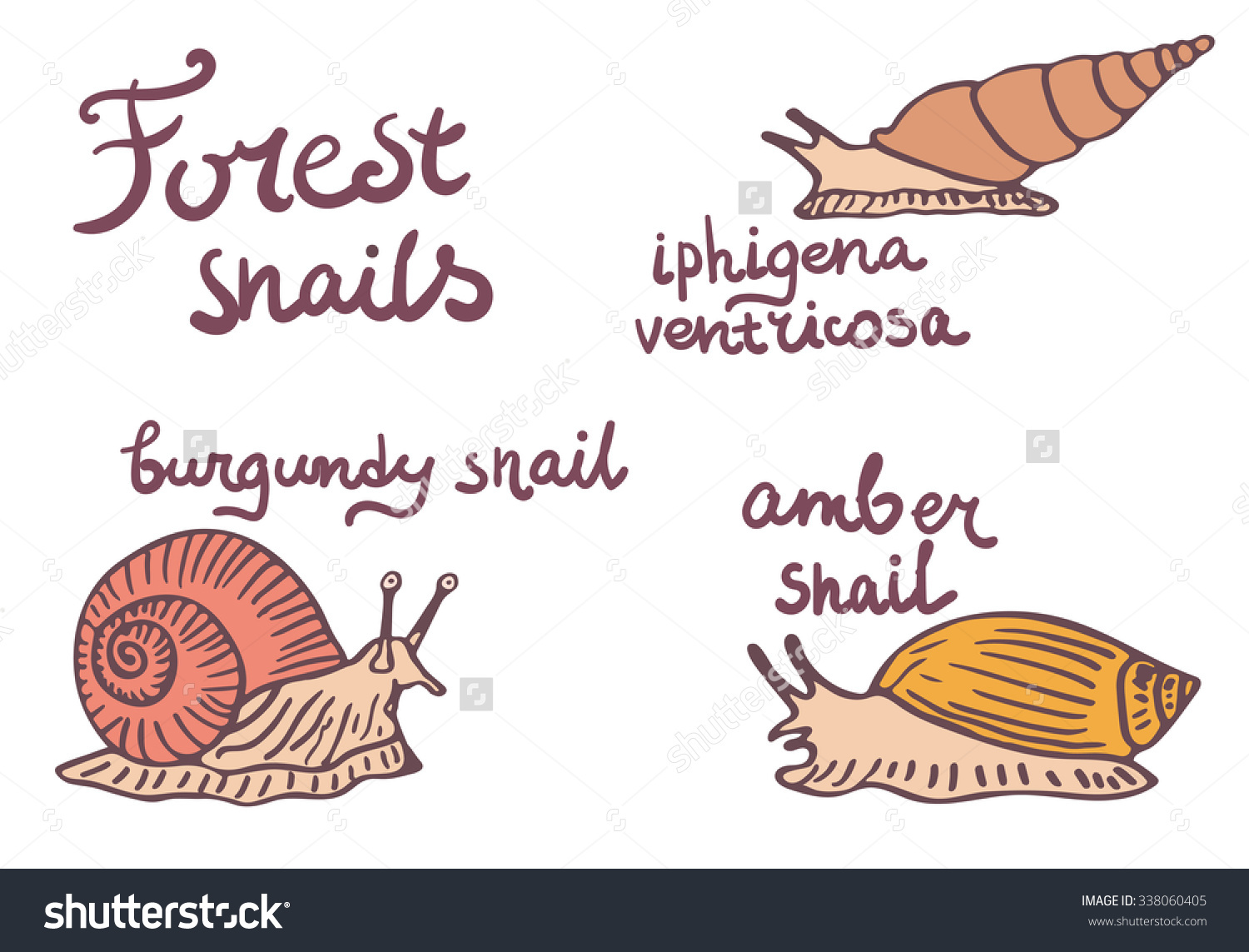 Set Of Forest Snails Isolated Illustrations. Burgundy Snail, Amber.