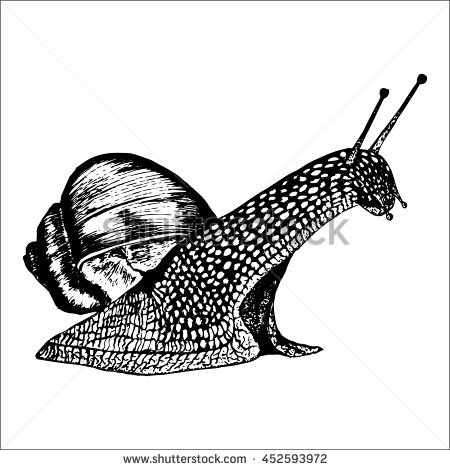 Roman Snail Stock Photos, Royalty.
