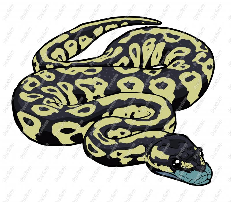Python clipart 20 free Cliparts | Download images on ...