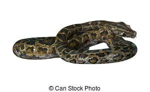 Burmese python Illustrations and Clip Art. 28 Burmese python.