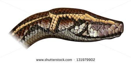 Burmese python clipart - Clipground