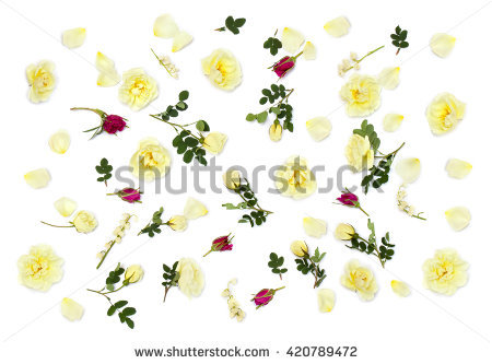 Small Burnet Stock Photos, Royalty.