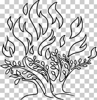 Shrub Burning Bush Callistemon Speciosus PNG, Clipart, Annual Plant.