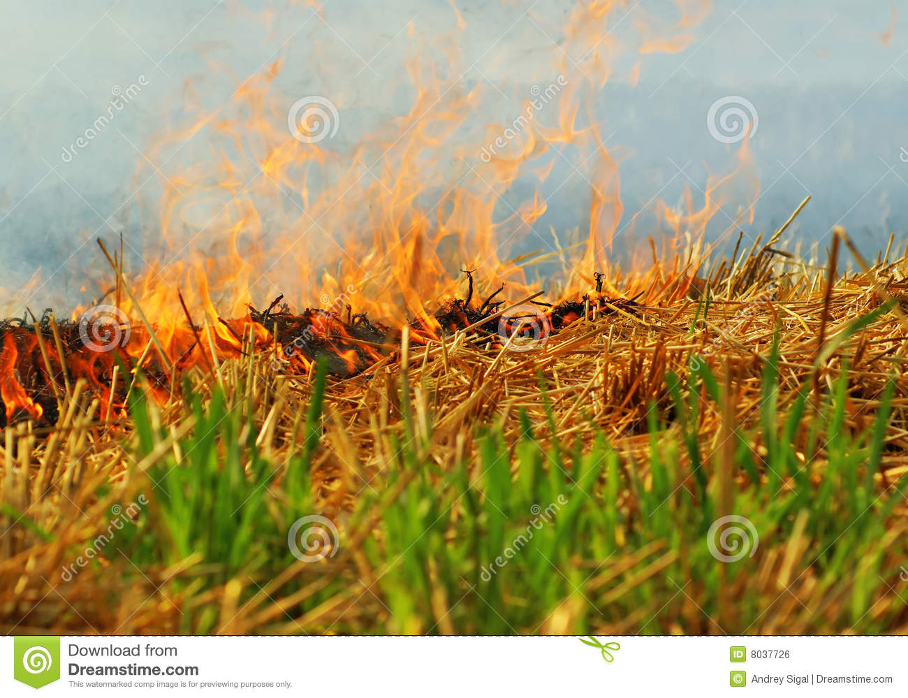 Crop Burning In The Rice Fields Of Southern China Stock Photos.