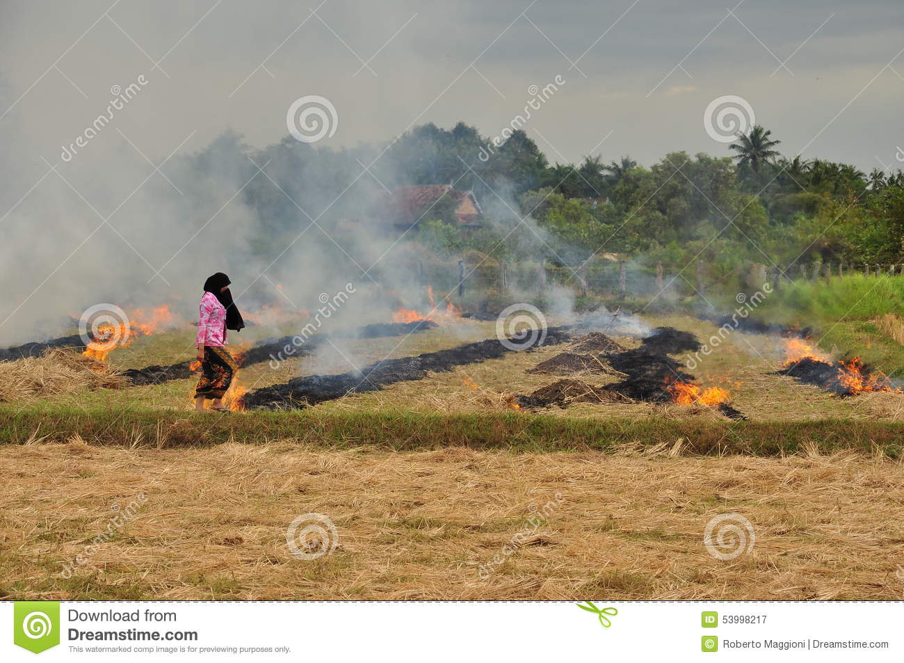 Rice Field Burning In Cambodia Editorial Photography.