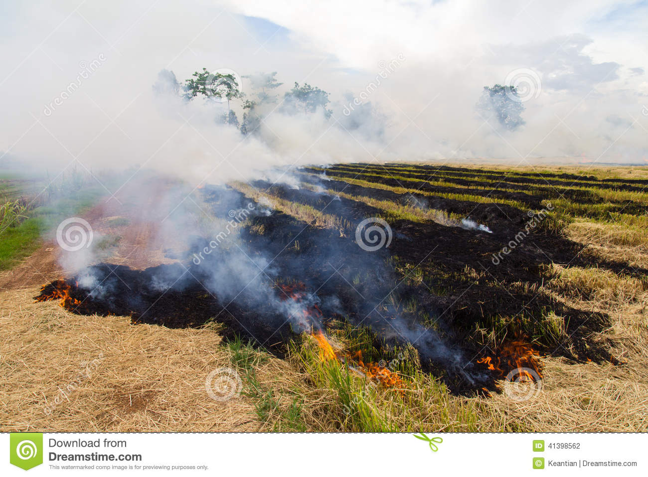 Burning Rice Stubble Stock Photo.