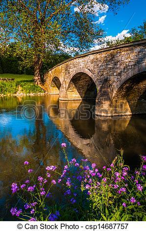 Stock Images of Purple flowers and Burnside Bridge reflecting in.