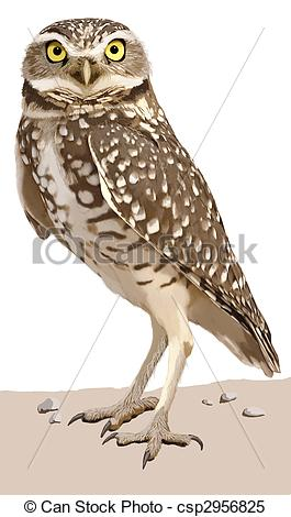Stock Illustrations of Burrowing Owl.