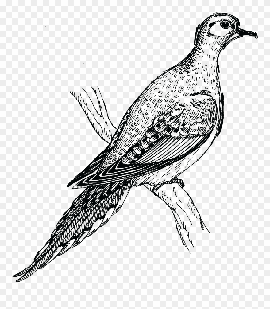 Turtle Dove Clipart Holy Ghost.