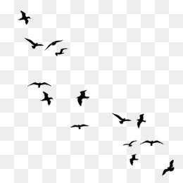 Free download Flock Of Birds png..