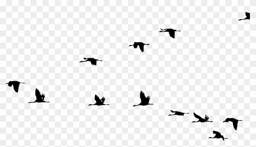 Animals Birds Cranes Flying Formation Silhouette.