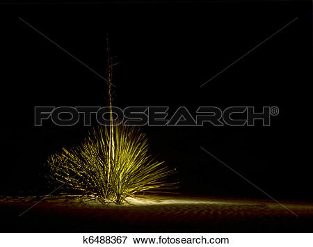 Picture of Illuminated bush at night in White Sands National.