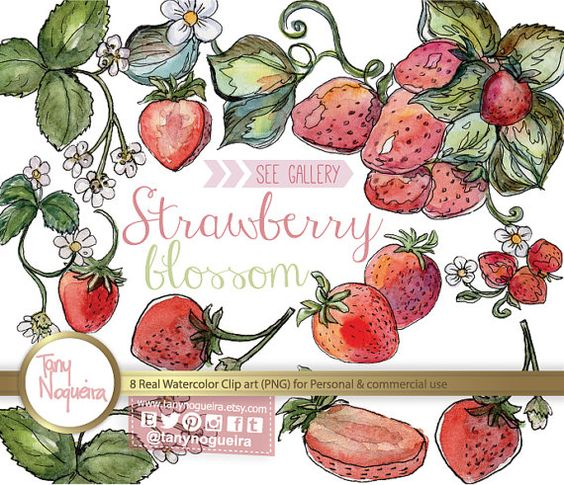 Strawberry Blossom clip art images watercolor hand painted PNG.