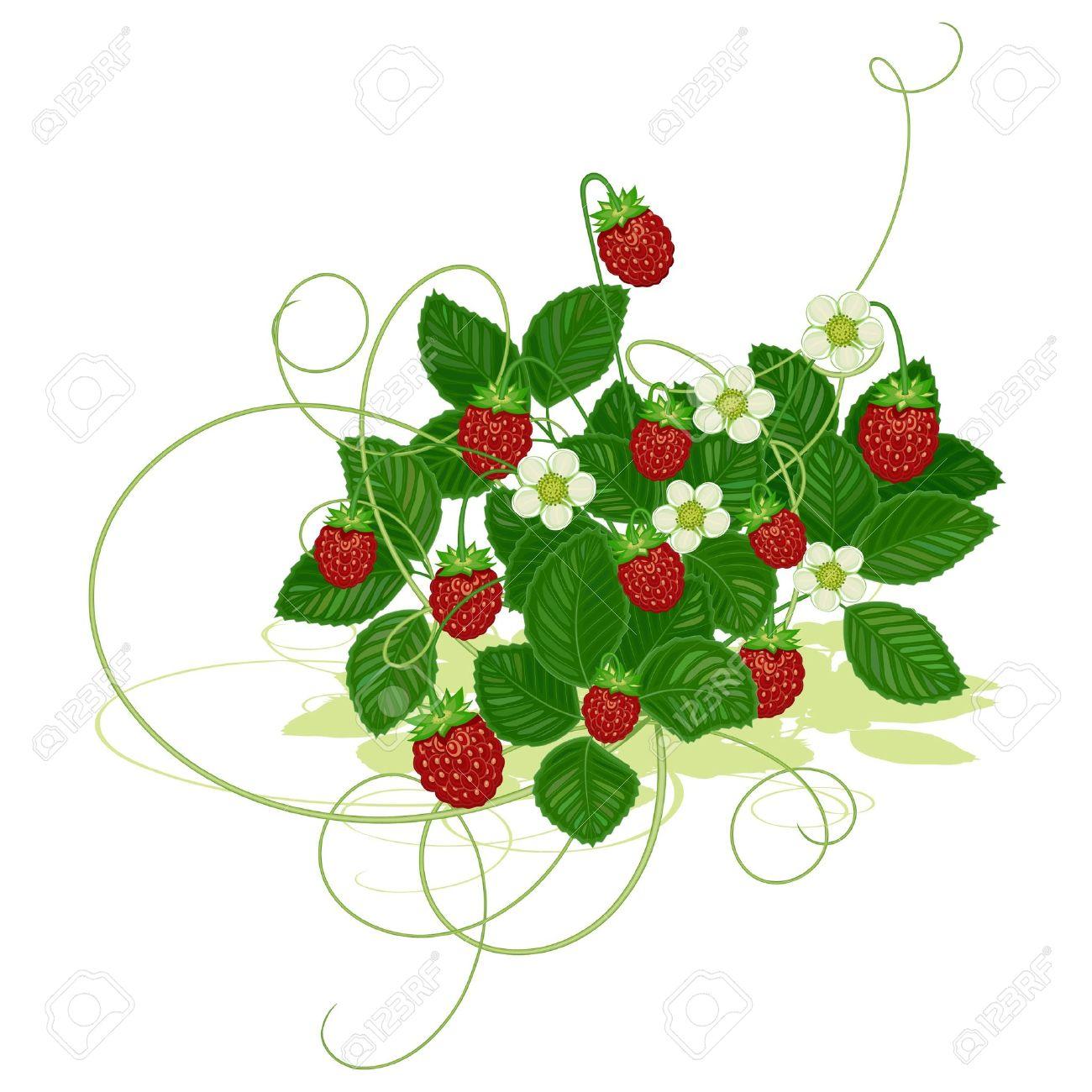 Berry bush clipart.