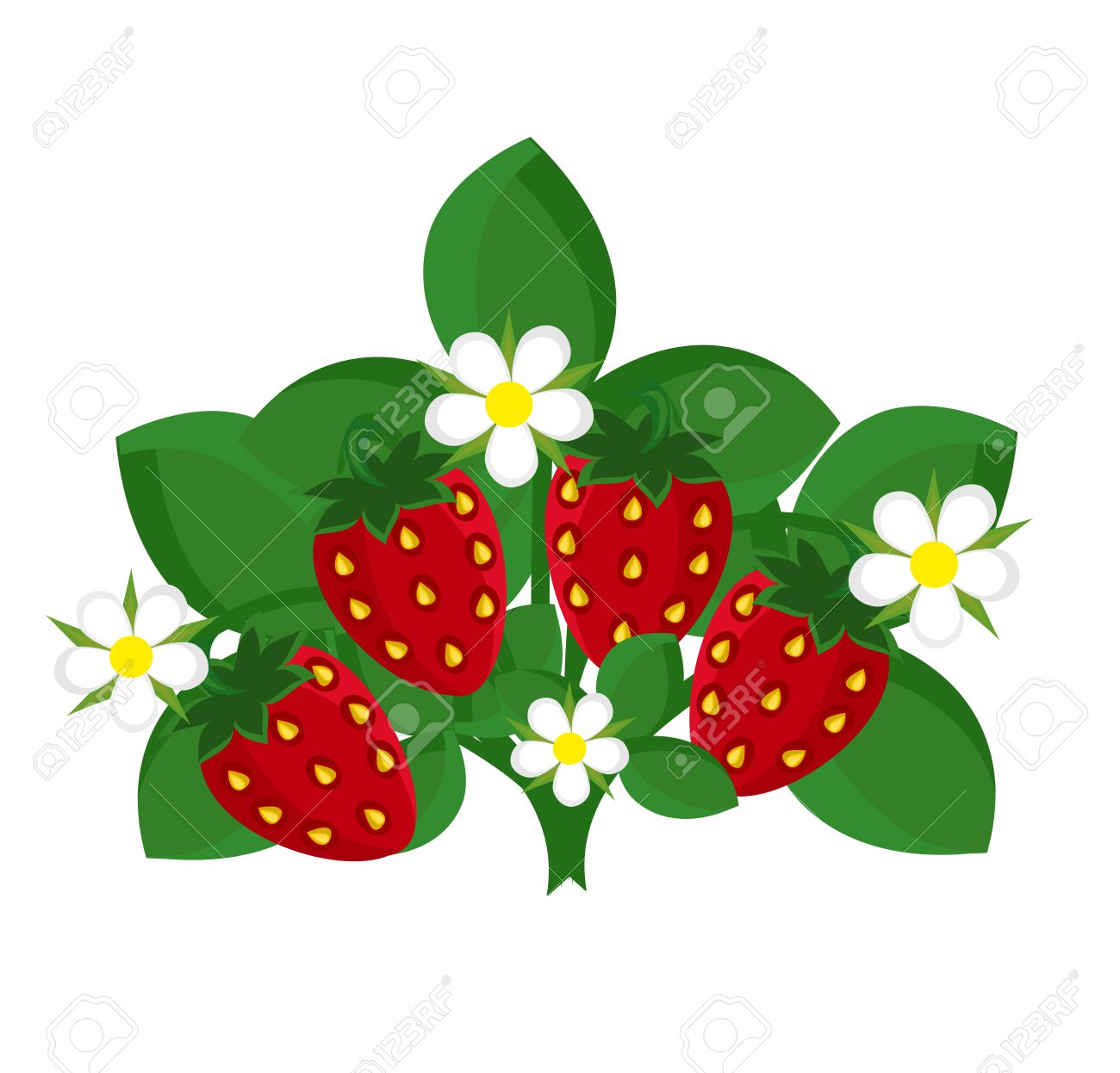 Strawberry Shrub With Fruits And Flowers. Royalty Free Cliparts.