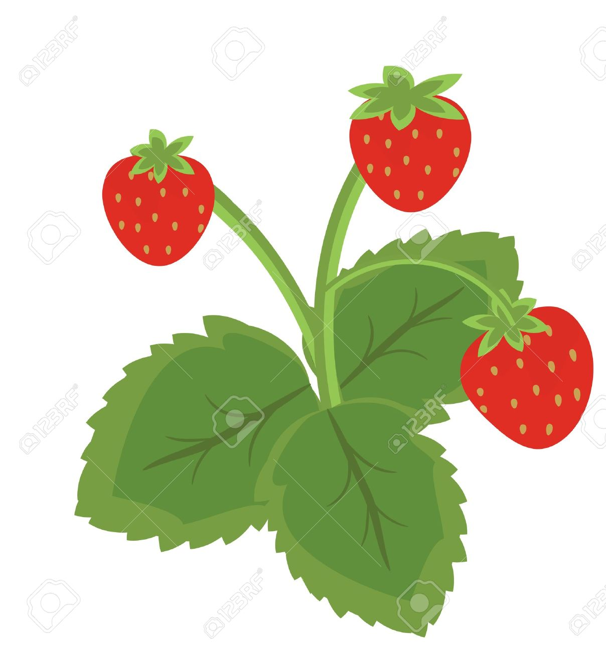 Strawberry Fruits With Leaves Royalty Free Cliparts, Vectors, And.
