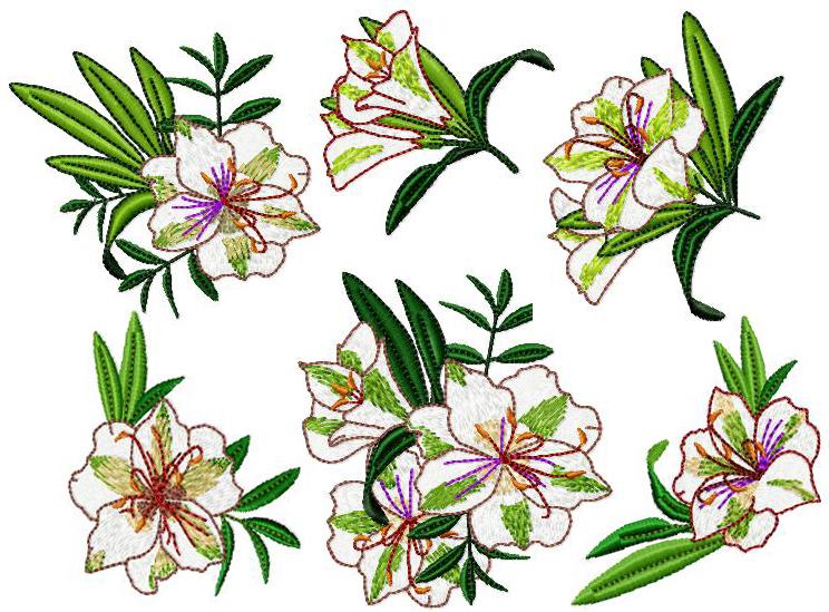 Bush Lilies 4x4.