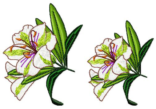 """Bush Lily 3 for 4""""x4""""."""