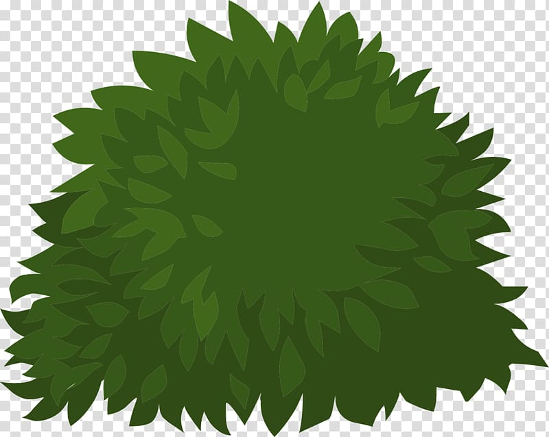 Shrub Plant , bushes transparent background PNG clipart.